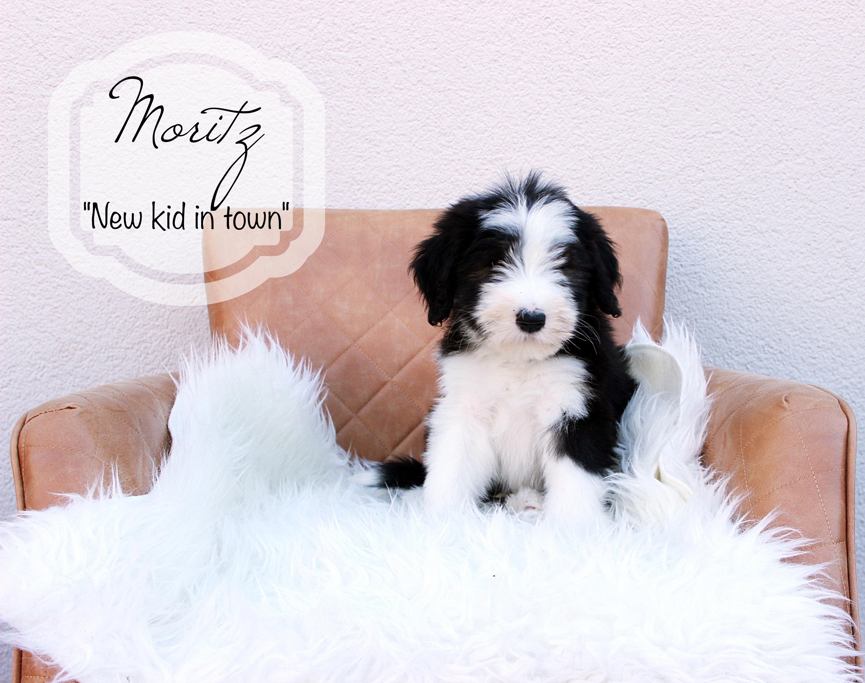 Moritz.W9b.2