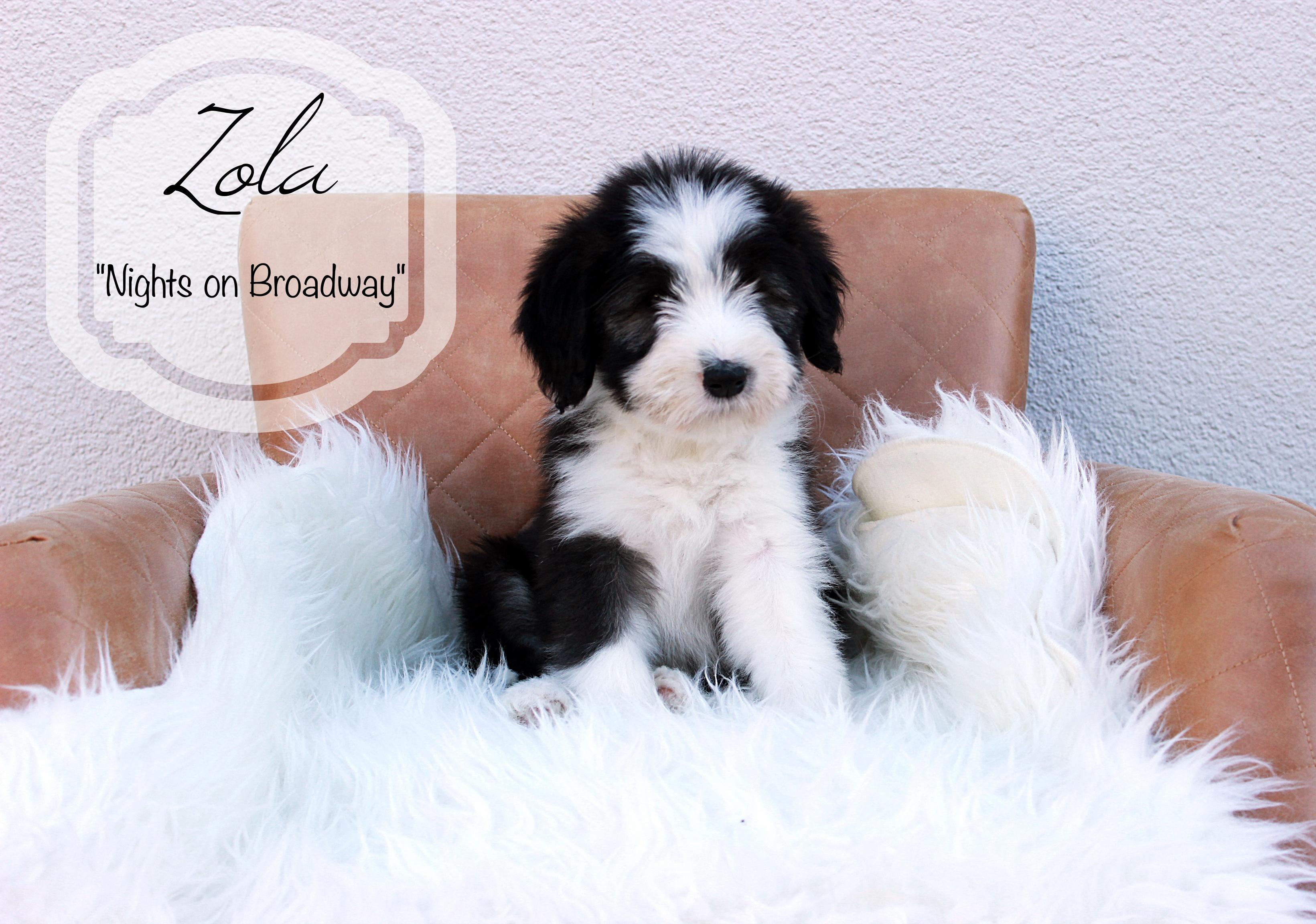 Zola.W9b.1