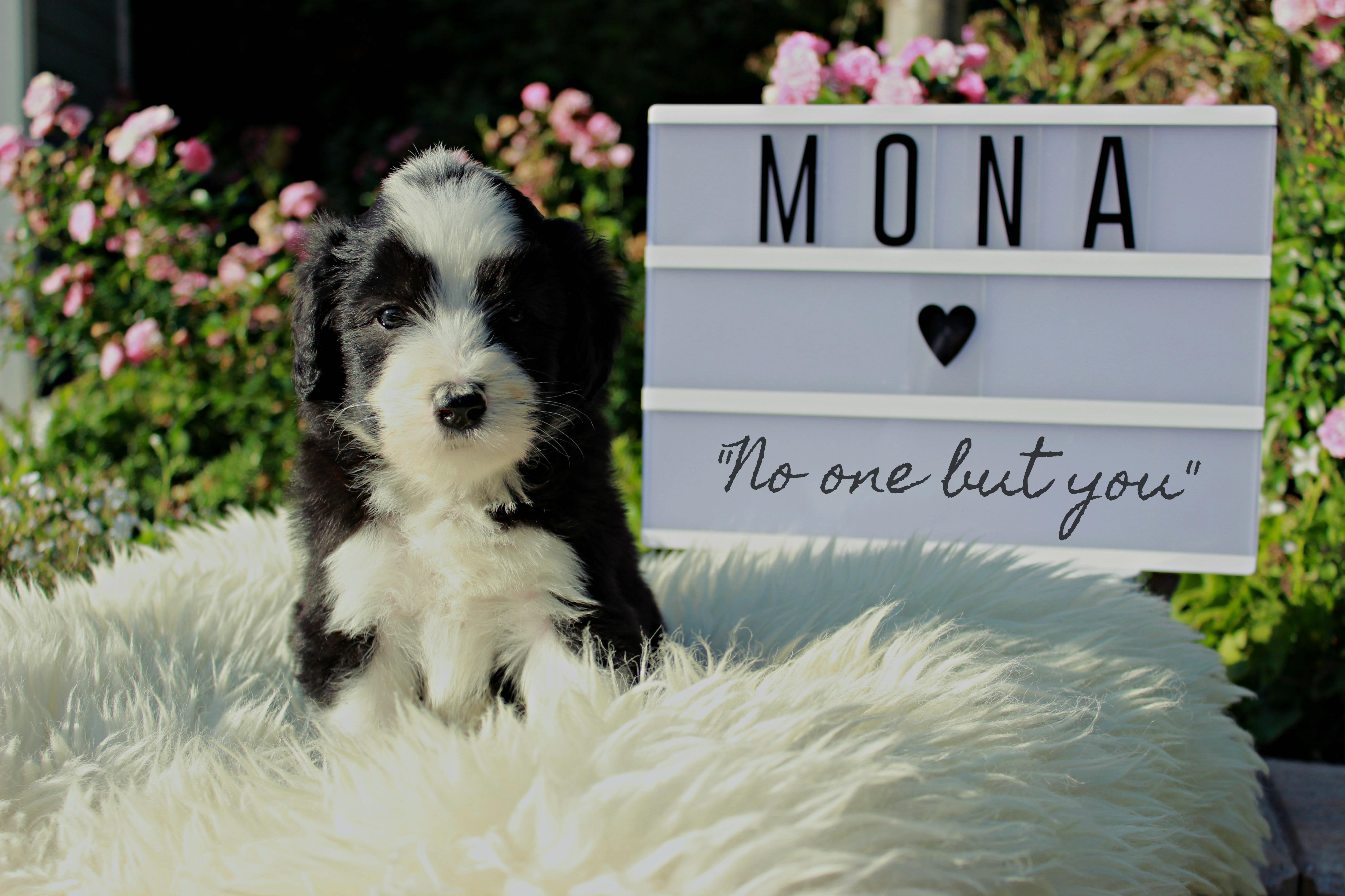 Monab.5.N