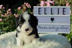 Ellieb.5.1.N-2