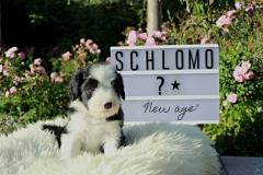 Schlomob.5.N